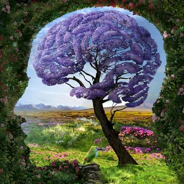 Ваш мозг подобен саду