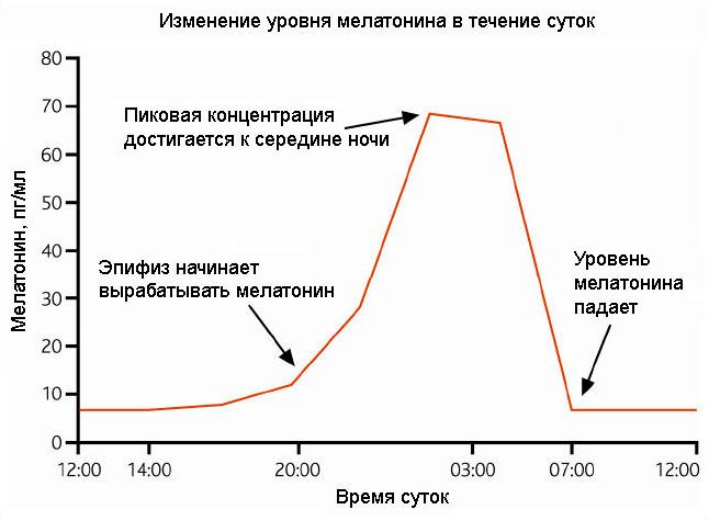 График изменения уровня мелатонина в течение суток